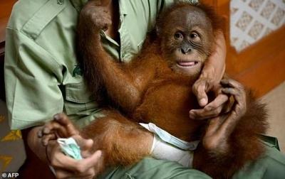 Ketut Diandika Sedih Bon Bon Dibawa ke Sumatera