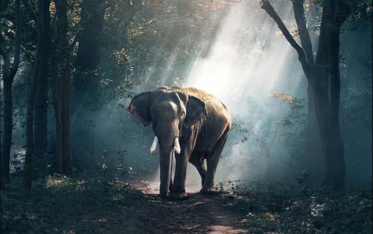 'Neneng' Berusia 55 Tahun Mati di Medan Zoo