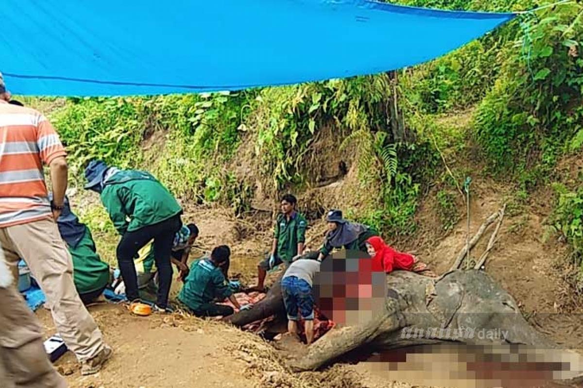 Bangkai 'Neneng' Ditanam di Kawasan Medan Zoo