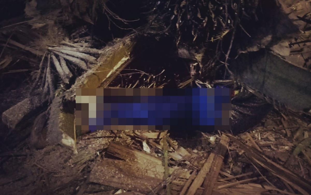 Tertimpa Pohon Sawit Saat Duduk di Warung Tuak, Seorang Pria Tewas