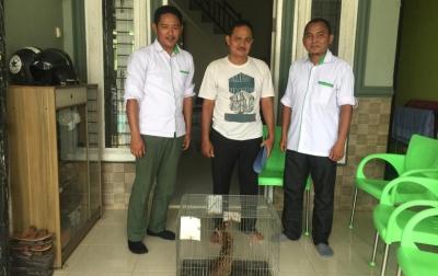 Warga Labura Serahkan Kucing Kuwuk ke BBKSDA Sumut
