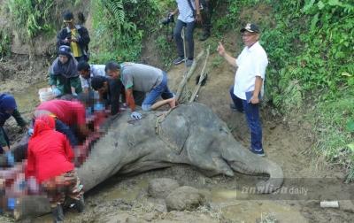 Akhyar Kunjungi Medan Zoo untuk Melihat 'Neneng' Mati