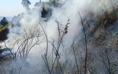 Kebakaran Hutan dan Lahan Terjadi di Desa Paropo Dairi
