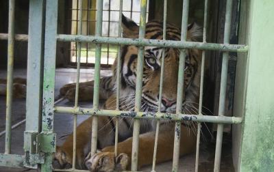 Pandemi Covid-19, Satwa di Kebun Binatang Medan Terancam Kelaparan