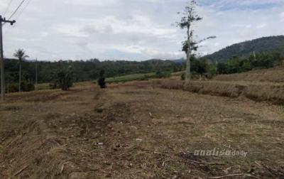 Ratusan Hektare Lahan Persawahan di Dairi Tak Bisa Ditanami
