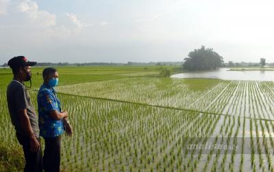 Ratusan Hektar Sawah Tadah Hujan Terendam Air