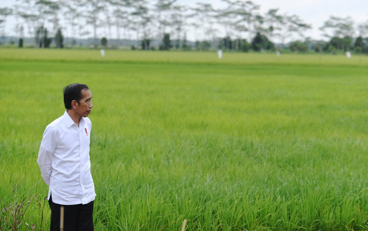 Jumlah Penambahan Pasien Corona Tinggi, Ini Kata Jokowi