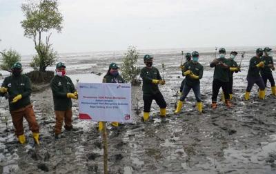 Lestarikan Pesisir, Pertamina Tanam 1.000 Bibit Mangrove