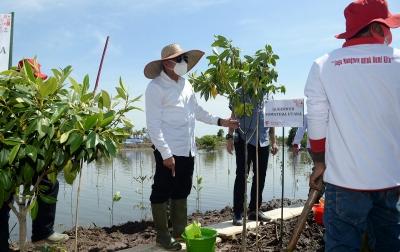 Rehabilitiasi Mangrove Sebagai Upaya Selamatkan Alam