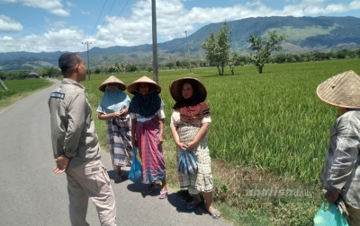 Pupuk Subsidi Langka di Aceh, Ombudsman: Kekurangan Kuota