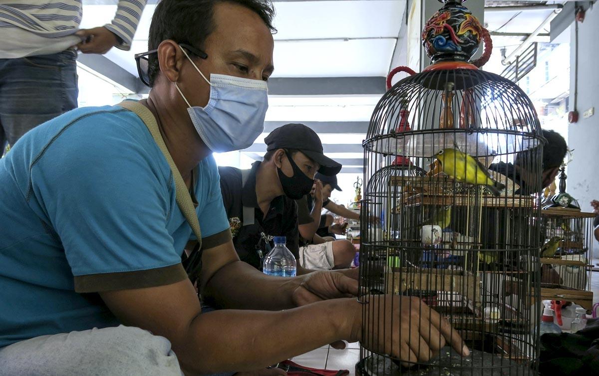 Foto: Lomba Burung Pleci
