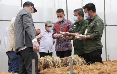 Program Food Estate di Humbang Hasundutan Dimulai Bulan Depan