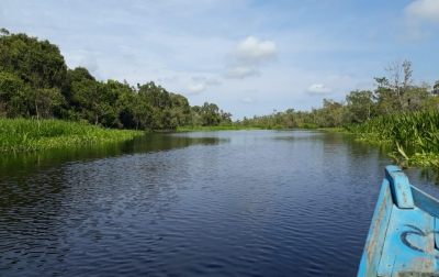 Pesona Rawa Singkil, Wisata Amazon Kedua Indonesia