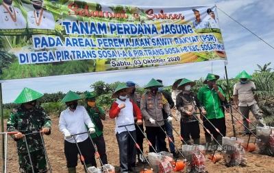 Ali Sutan Tanam Jagung dan Padi di Lahan PSR