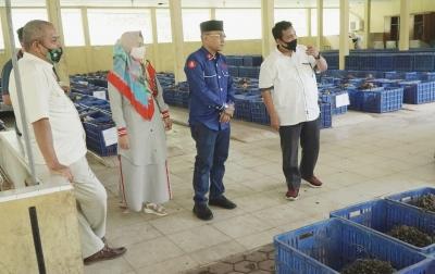 Usaha Produksi Bibit Kelapa Sawit Berpotensi Tingkatkan Ekonomi Simalungun