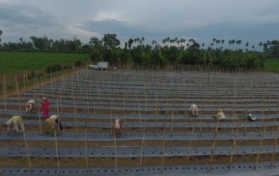 Focus Farm, Tempat Rekreasi Sambil Belajar Bisnis Pertanian