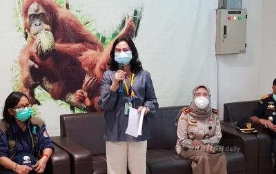 Dipulangkan, Orangutan dari Thailand dan Malaysia Bebas Corona