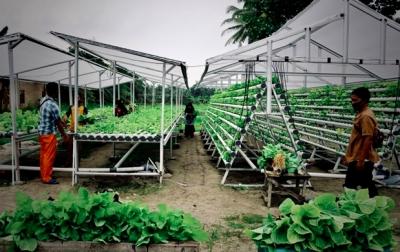 Masyarakat Kuala Tanjung Panen Sayuran Hidroponik Bantuan Inalum