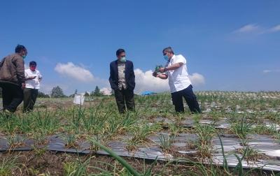 Petani Food Estate Optimis Panen Raya Awal Maret 2021 Memuaskan