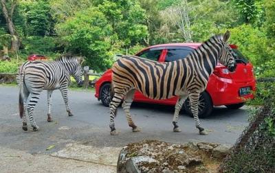 Hibah Pariwisata Diperluas ke Taman Rekreasi