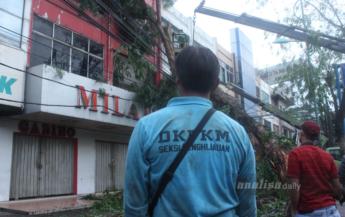 Foto: Pohon Tumbang