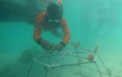 Terumbu Karang di Barat Indonesia Mengalami Tekanan Sangat Tinggi