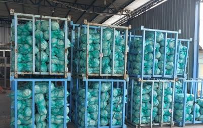 Ekspor Kubis Sumatera Utara Meningkat