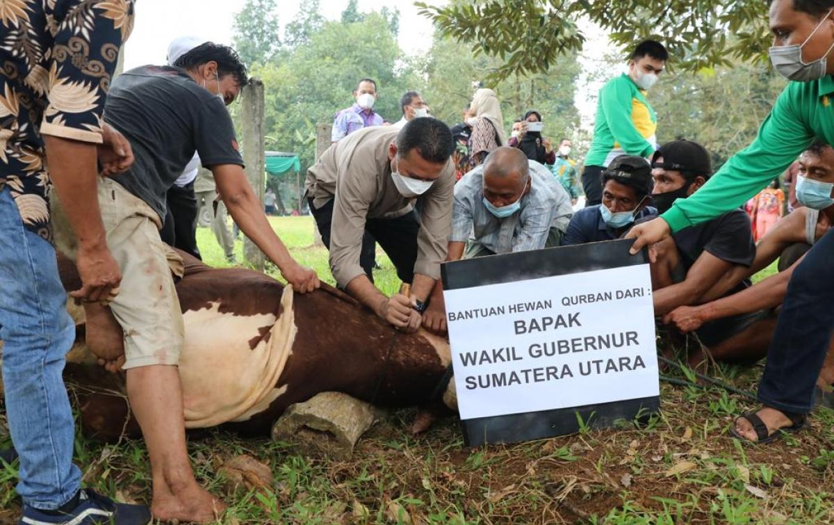 Ijeck Sembelih Sapi Kurban Berbobot 1,2 Ton dari Jokowi
