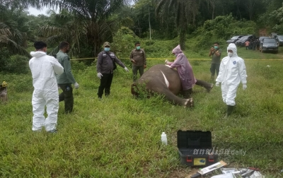 Gajah Mati Tanpa Kepala, Diduga Diracun Pemburu Gading