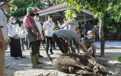Kecamatan Medan Petisah Kurban 16 Ekor Sapi dan 4 Kambing