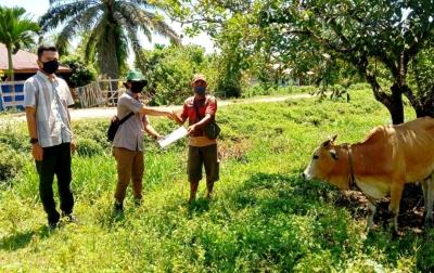 PT SSS Bagikan Sapi Kurban ke Lima Desa