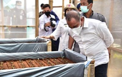 Tingkatkan Produksi Kentang Sumut, Gubsu Dorong Pengembangan Bibit