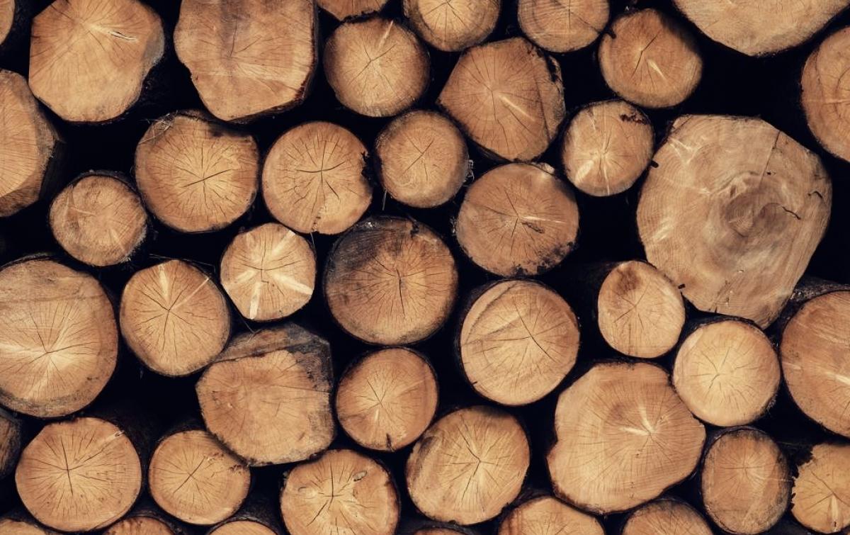 Polda Sumut Diminta Usut Penebangan Pohon Pinus di Perbatasan Simalungun-Toba