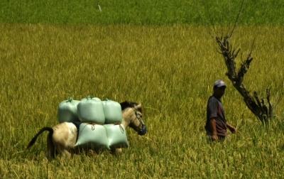 Pemerintah Diminta Betul-betul Mengevaluasi Program Food Estate