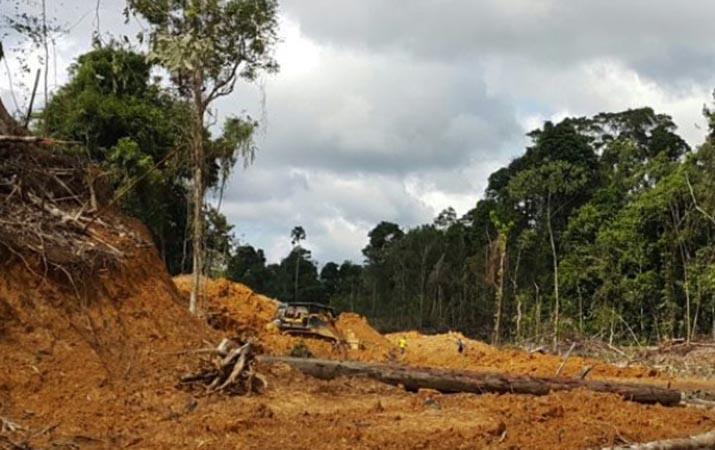 sempat-dinyatakan-hilang-kontraktor-kayu-ditemukan-tewas-di-dalam-hutan