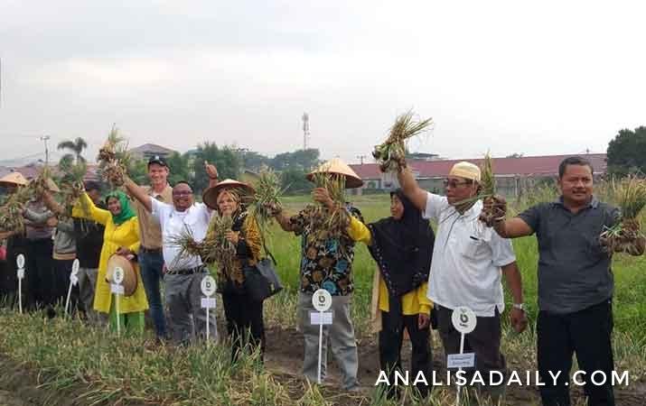 bejo-indonesia-kenalkan-inovasi-teknologi-penanaman-bawang-merah