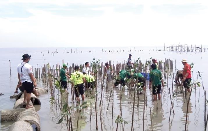 penanaman-mangrove-di-pantai-paluh-getah